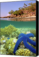 Lizard Canvas Prints - Lizard Island Reef Canvas Print by Adam Gormley Photography