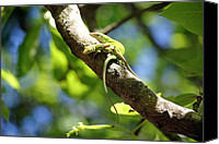 Anole Lizards Mating Digital Art Canvas Prints - Lizard Lovin Canvas Print by Suzanne  McClain