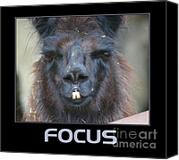 Llama Mixed Media Canvas Prints - Llama Focus Canvas Print by Smilin Eyes  Treasures
