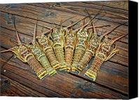 Crawfish Canvas Prints - Lobster for Dinner Anyone Canvas Print by Noah Katz