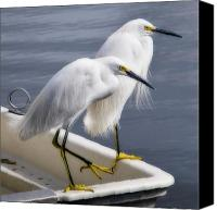 Herons Canvas Prints - Loitering Canvas Print by Kevin Bergen