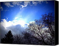 Trees Special Promotions - Lomo Sky and Trees Canvas Print by Douglas Wilks
