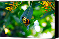 Michael Krahl Canvas Prints - Lone Butterfly Canvas Print by Michael Krahl