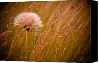 Flower Canvas Prints - Lone Dandelion Canvas Print by Bob Mintie