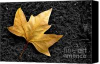 Walkway Canvas Prints - Lone Leaf Canvas Print by Carlos Caetano