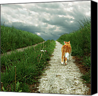 Domestic Animals Photography Canvas Prints - Lone Red And White Cat Walking Along Grassy Path Canvas Print by  Axel Lauerer