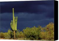 Cactus Canvas Prints - Lone Sentry Canvas Print by Douglas J Fisher