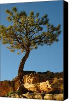 Bryce Canyon Canvas Prints - Lone Tree and Moon in Bryce Canyon Canvas Print by Bruce Gourley