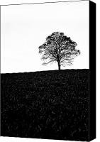 Co Canvas Prints - Lone Tree Black and White silhouette Canvas Print by John Farnan