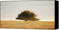 Solitude Canvas Prints - Lone Tree In Field, Argentina Canvas Print by Franco Rostan