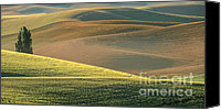 Rolling Hills Canvas Prints - Lone Tree in the Palouse  Canvas Print by Sandra Bronstein