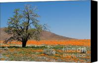 Poppies Canvas Prints - Lone Tree in the Poppies Canvas Print by Sandra Bronstein