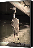 Long Pyrography Canvas Prints - Lonely Flamingo Bird Canvas Print by Radoslav Nedelchev