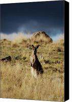 Kangaroo Canvas Prints - Lonely Canvas Print by Stephanie Ohnesorge