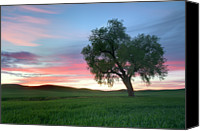 Solitude Canvas Prints - Lonely Tree At Sunset In Palouse Wheat Fields Canvas Print by Dene