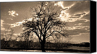 Dh Canvas Prints - Lonely Tree at Sunset Canvas Print by Sergio Aguayo