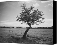 Lonesome Canvas Prints - Lonesome Tree Canvas Print by Marcio Faustino
