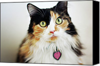 Gulf Coast States Canvas Prints - Long Haired Calico Cat Canvas Print by Genevieve Morrison
