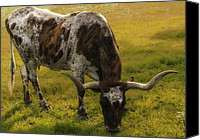 Grazing Canvas Prints - Long Horn Mid Fall Canvas Print by Kelly Rader