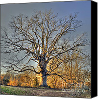 Old Trees Canvas Prints - Longevity II Canvas Print by Benanne Stiens