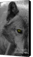 Wolf Photo Shot Canvas Prints - Look Into My Eye Canvas Print by Debra     Vatalaro
