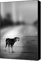 Dog Photo Canvas Prints - Looking Back Canvas Print by Christopher Elwell and Amanda Haselock