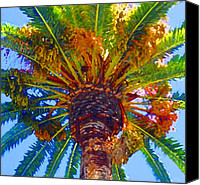 Tropical Plants Canvas Prints - Looking up at Palm Tree  Canvas Print by Amy Vangsgard