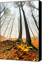 Bulgaria Canvas Prints - Lords of the Forest Canvas Print by Evgeni Dinev