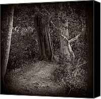 Monocromatico Canvas Prints - Lost in the Forest Canvas Print by Sharon Mau