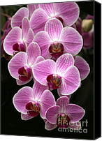 Florida Flowers Canvas Prints - Lots of Orchids Canvas Print by Sabrina L Ryan