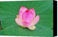 Lotus Leaves Canvas Prints - Lotus Bud Canvas Print by Elvira Butler