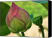 Lotus Bud Canvas Prints - Lotus dreaming 3 Canvas Print by Fran Woods