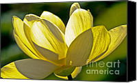 Lotus Pond Canvas Prints - Lotus Flower Canvas Print by Heiko Koehrer-Wagner