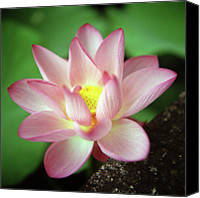 Pink Canvas Prints - Lotus Flower Canvas Print by Yoshika Sakai
