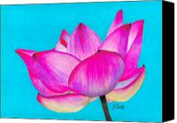 Flora Drawings Canvas Prints - Lotus  Canvas Print by Laura Bell