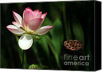 Botanical Beach Canvas Prints - Lotus Opening to the Sun Canvas Print by Sabrina L Ryan