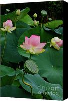 Lotus Bud Canvas Prints - Lotus Pond View A Canvas Print by Byron Varvarigos