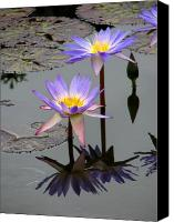 Purple Floral Canvas Prints - Lotus Reflection 4 Canvas Print by David Dunham