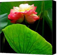 Debbie Canvas Prints - Lotus Sheild Canvas Print by Deborah  Crew-Johnson