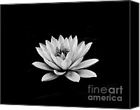 Monochrome Canvas Prints - Lotus  Canvas Print by Sumit Mehndiratta
