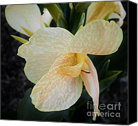 Canna Canvas Prints - Love Child Canvas Print by D J Larsen
