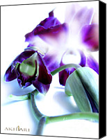 Violet Prints Photo Canvas Prints - Love Song Canvas Print by Mehran Akhzari