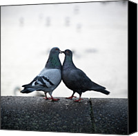 Kissing Canvas Prints - Lovebirds Canvas Print by Oscar Bjarnason