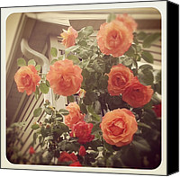 Pink Canvas Prints - Lovely! This Spring Has My Biggest Rose Canvas Print by Amber Flowers