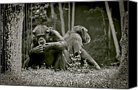 Unnatural Canvas Prints - Lovers Spat Amongst Primates Canvas Print by DigiArt Diaries by Vicky Browning