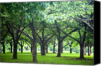 Meadows Canvas Prints - Low Trees In Flushing Meadows-corona Park Canvas Print by Ryan McVay