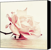 Rose Digital Art Canvas Prints - Lucid Canvas Print by Priska Wettstein
