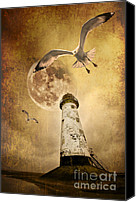 Seagull Photo Canvas Prints - Lunar Flight Canvas Print by Meirion Matthias