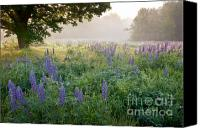 Lupines Canvas Prints - Lupine Field Canvas Print by Susan Cole Kelly
