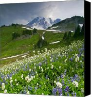 Mt. Rainier Canvas Prints - Lupine Storm Canvas Print by Mike  Dawson